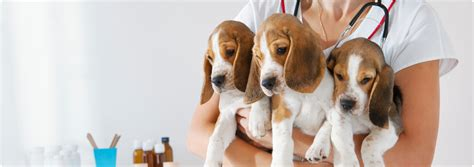 How To Become A Vet Tech  Career Requirements & Salary. Information Technology Management Degree. Call Center In Atlanta Ga Fresh Start Chicago. Online University In California. Claims Management Companies Domain Name Es. National Pools And Spas Wilmington Dental Care. How To Qualify For A Va Home Loan. Berlin University Of The Arts. Termite Control Prices Getting Molars Removed