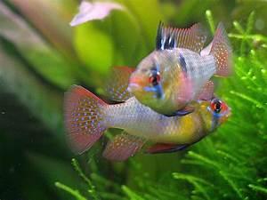 Die Besten Aquarien : aquarium mit fischen sz55 hitoiro ~ Lizthompson.info Haus und Dekorationen