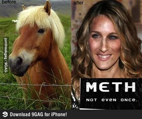 Sarah Jessica Parker Horse Meme - gallery for gt sarah jessica parker horse reflection