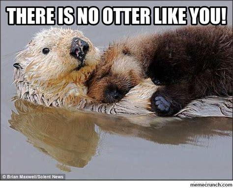 Otter Love Meme - cute otter meme memes