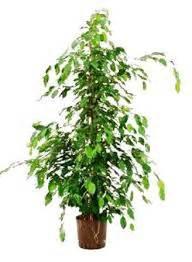 plante dans chambre crea vegetal les plantes dans une chambre