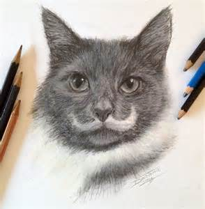 drawings of cats pencil cat fast sketch by atomiccircus on deviantart