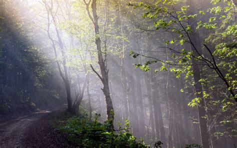 wallpapers de bosques misteriosos taringa