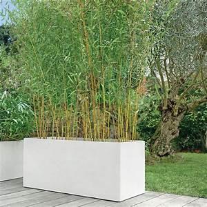 Bambous En Pot : bambou moyen phyllostachys aureosulcata 39 aureocaulis 39 en ~ Melissatoandfro.com Idées de Décoration