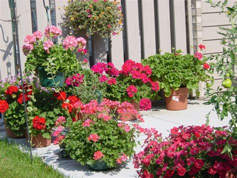 Potted Plants For Patios