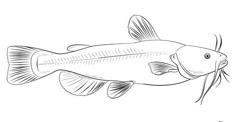 gambar mewarnai ikan lele untuk anak gambar mewarnai