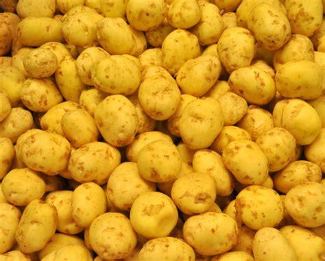 cuisiner les pommes de terre de noirmoutier c 39 est moi qui l 39 ai fait 10 idées pour cuisiner les