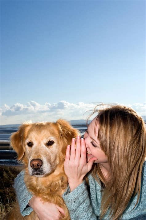 Can dogs understand what we say?   Dog Training   Animal ...