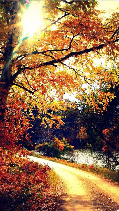 Pretty Fall Wallpaper Iphone 7 by Autumn Iphone 5 Wallpaper Backgrounds Iphone