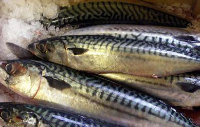 Varēs pieteikties vairākiem Eiropas Zivsaimniecības fonda ...