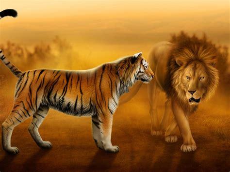 Desktop Hd Lion And Tiger Pics : Wallpapers13.com