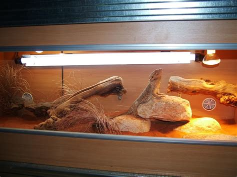 Bearded Heat L Distance by Lighting Realm Of The Bearded Dragons