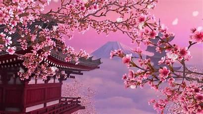 Blossom Cherry Aesthetic Wallpapers 1080p Anime Sakura