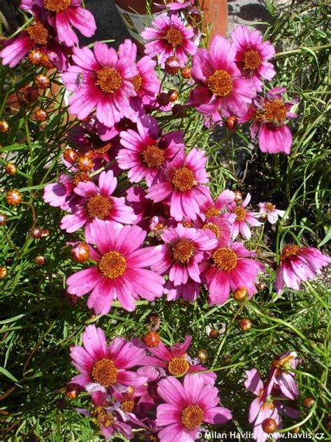 perennial flowers zone 5 1000 images about zone 5 flowers on pinterest sun spring and perennials