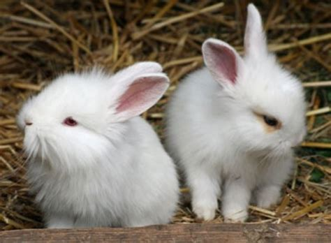 cute rabbit hd beautiful wallpapers picture
