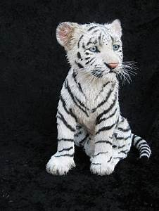 Pet a baby white tiger!! | Bucket List! | Pinterest ...