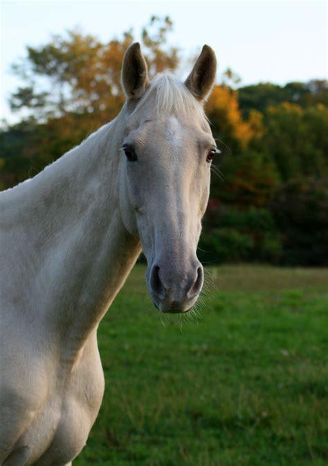 horses ugly horse offline rissa
