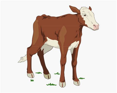 Some cow svg may be available for free. Brown And White Baby Cow Svg Clip Arts - Cows In Animal ...