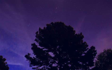 nj  star shine night dark blue sky wood purple wallpaper