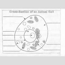 Animal Cell Parts Worksheet  Animal Cell Diagram Unlabeled Resources Animal Cell Digital Image