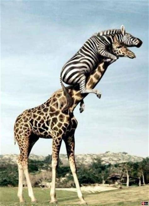 картинки с животными художников