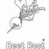 Coloring Beet Root Vegetable Printable Hellokids sketch template