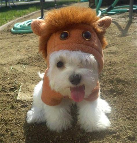 westie las top  pet costumes featuring westies
