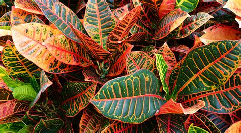 Tropical Plants Creating The Best Environment