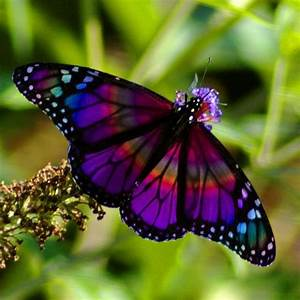 Rainbow Butterfly by PhotoMasterGreg @Tony Gebely Gebely ...