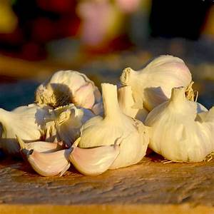 Planter Ail Rose : ail rose flavor planter 1 kg ~ Nature-et-papiers.com Idées de Décoration