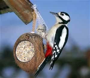 Vogelfutter Selbst Herstellen : vogelfutter selbstgemacht und basteln von vogelfutter stellen ~ Orissabook.com Haus und Dekorationen