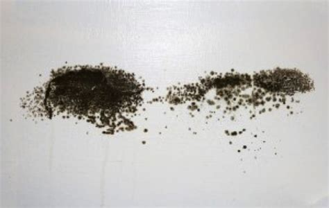 rid  black mold  natural solutions  home