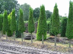 Thuja Smaragd Pflanzabstand : thuja lebensbaum die perfekte heckenpflanze ~ Michelbontemps.com Haus und Dekorationen