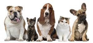 pictures of cats and dogs the right way to calculate a cat or s human age don