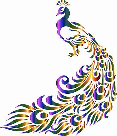 Peacock Colorful Clipart Svg