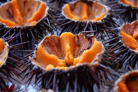 oursin cuisine 10 animali che vengono mangiati vivi gizzeta