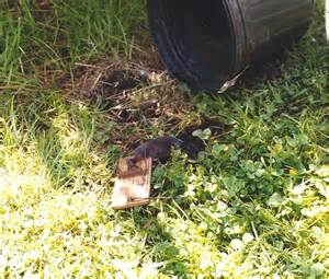 Catching Moles with Mouse Traps