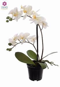 Künstliche Orchideen Im Topf : k nstliche orchidee wei 41 cm im topf ~ Watch28wear.com Haus und Dekorationen