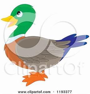 Mallard Duck Clipart – 101 Clip Art
