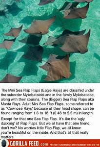 The Majestic Sea Flap Flaps  9 Pictures
