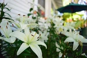 lily's images - usseek com