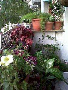 dubai garden centre best balcony competition balcony With katzennetz balkon mit philips garden