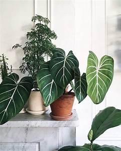 Pflanze Große Blätter : 22 sch ne zimmerpflanzen mit bunten bl ttern als farbtupfer im interieur ~ Avissmed.com Haus und Dekorationen