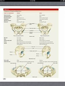 Principles Of Anatomy And Physiology  Chapter 8  The