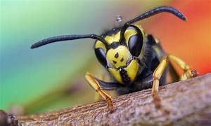 Was Hält Wespen Fern : tipps gegen wespen insekt control ~ Whattoseeinmadrid.com Haus und Dekorationen