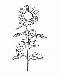 Sunflower Free Colouring Pages