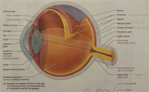 Ufe0f Accessory Structures Of The Eye  Human Eye Anatomy