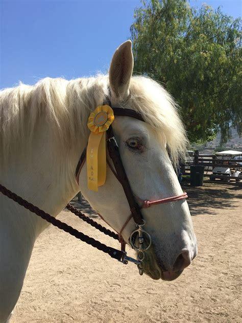 horse draft american cream amber horses breeds rare endangered eyes lola base