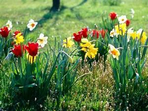 Blumen Im Frühling : garten gestaltung im fr hling und sommer blumen und pflanzen ~ Orissabook.com Haus und Dekorationen