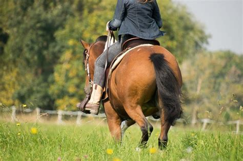 forget horses types never ll challenging ride